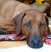 Jasper - calm, grounded presence