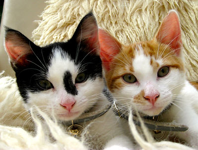 Gizmo and Peanut, Animal Assisted Psychotheapy - Photography Emma Zadravetz
