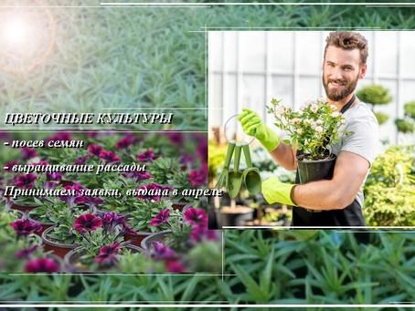 """Услуга «Цветочные культуры"""""""