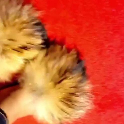 Natural Fur Slides