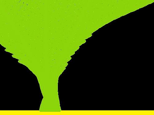 GAP 65