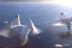 20041218 Lac des Cygnes