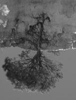 L'arbre sans dessus dessous - Grégory Courtois