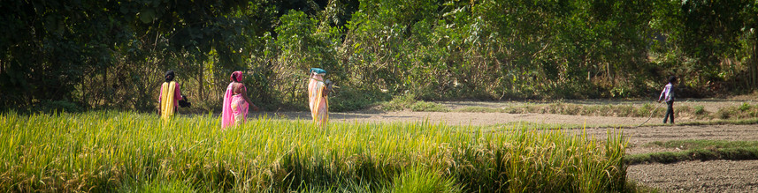 9.Fleurs_des_champs_népalais - Grégory Courtois