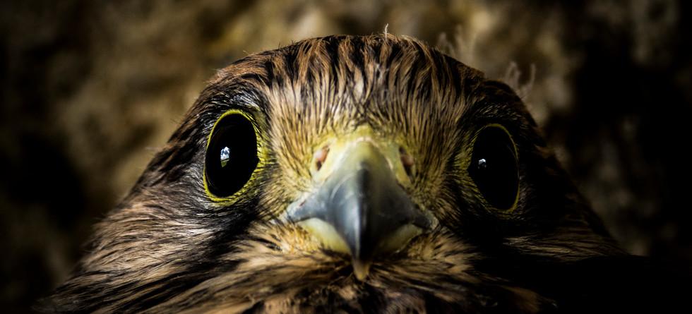 8.Les yeux dans les yeux - Grégory Courtois