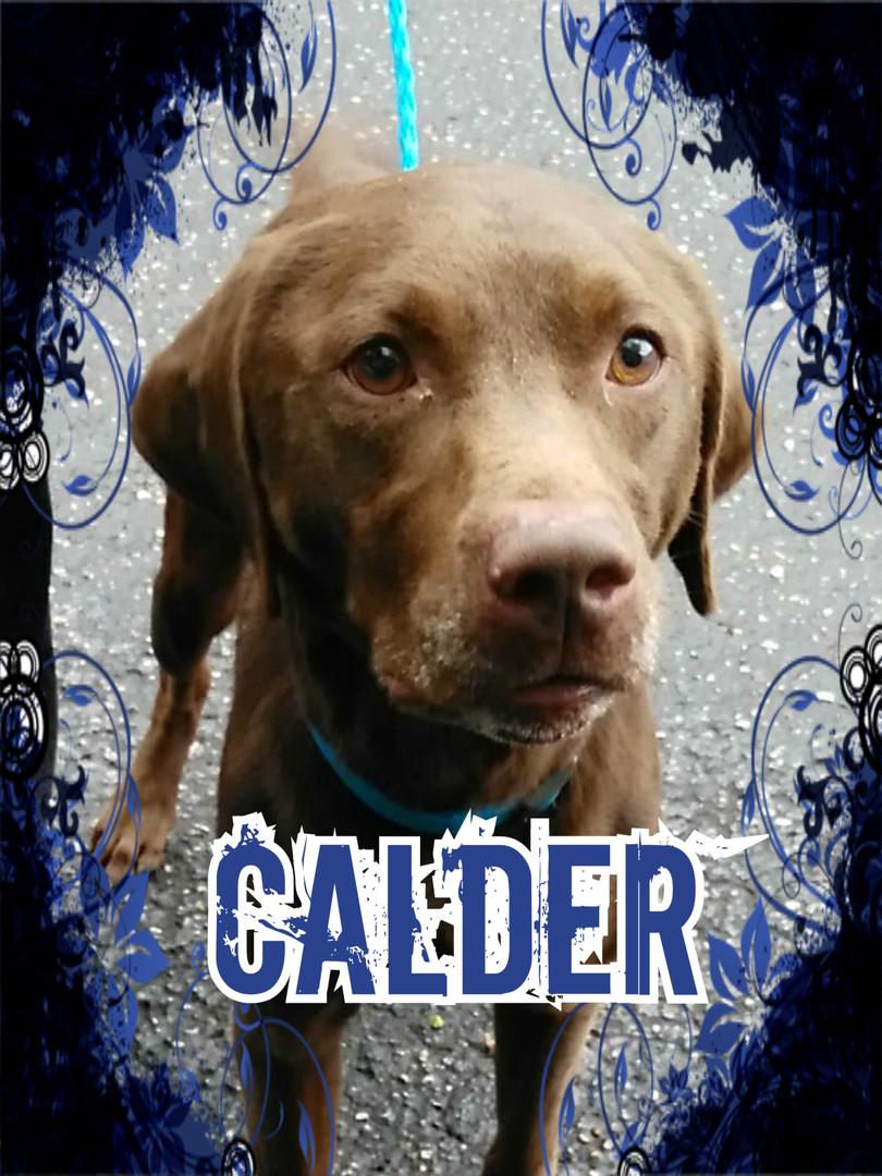 Calder Cover.jpg