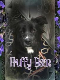 Fluffy Bear Cover.jpg