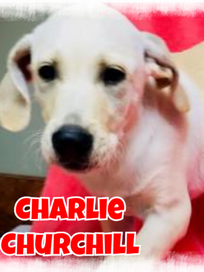 Charlie cover.png