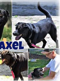 Axel Cover.jpg