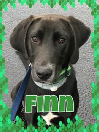 Finn Cover2.jpg