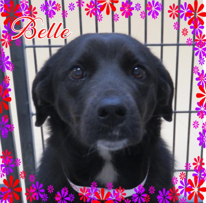 Belle Cover.jpg