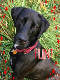 Flint Cover.jpg