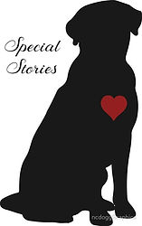 Special Stories Cover2.jpg