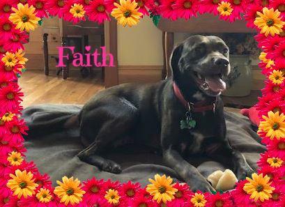 Faith Cover.jpg