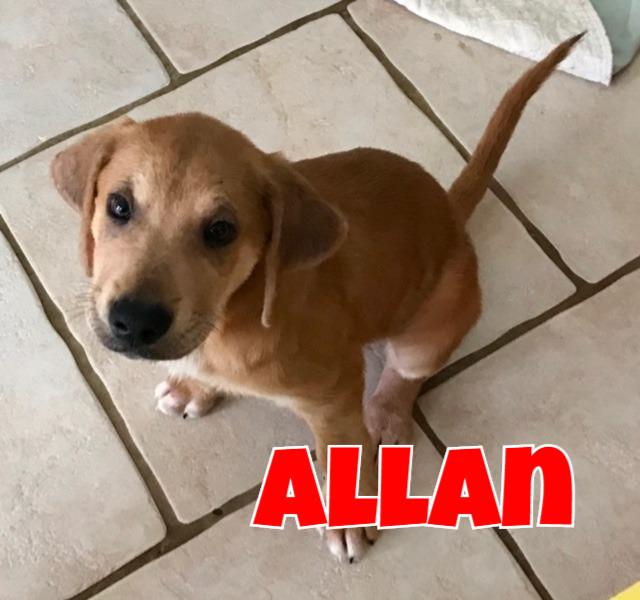 Allan Cover.jpg