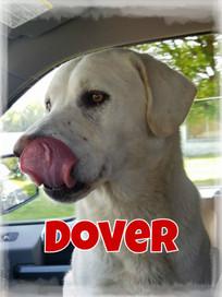 Dover Cover.jpg