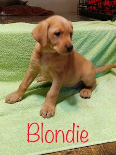 Blondie.jpeg
