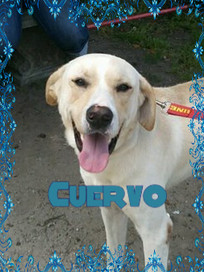 Cuervo Cover.jpg