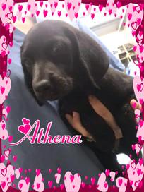 Athena Cover.jpg