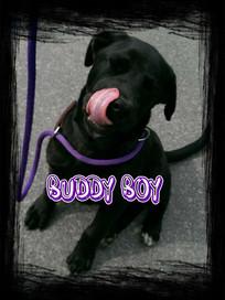 Buddy Boy Cover.jpg
