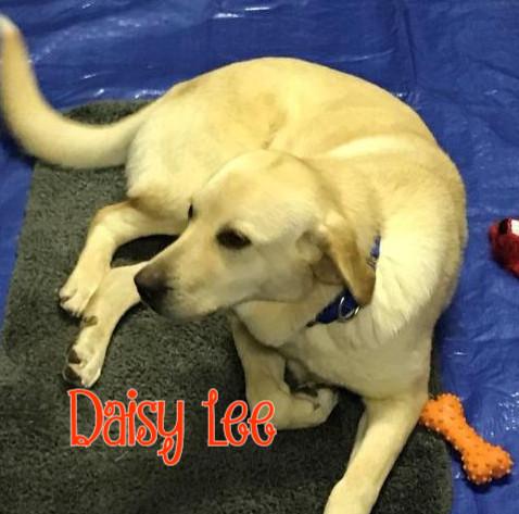 Daisy Lee Cover.jpg