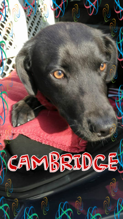 Cambridge cover.jpg