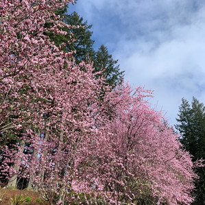 Spring Time at The Empress Estate!