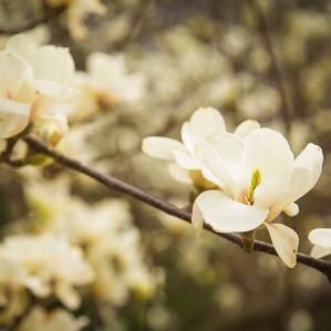 A New Magnolia at The Empress