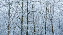 A Wintery Wonderland