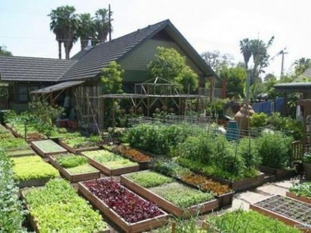 Sehe wie diese Familie 2700kg Nahrung in ihrem eigenen Zuhause produziert