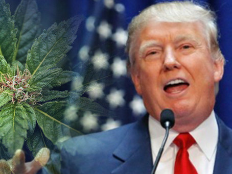 Good News - Trump besiegelt das Ende der Hanf-Prohibition!