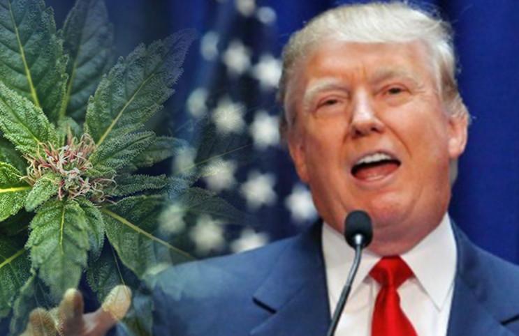 Trump Hanf Legalisierung