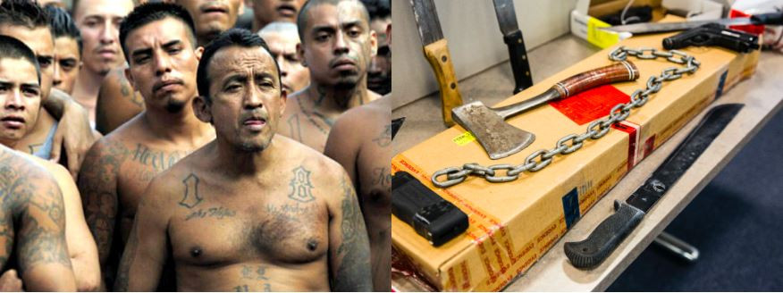 MS-13 Donald Trump