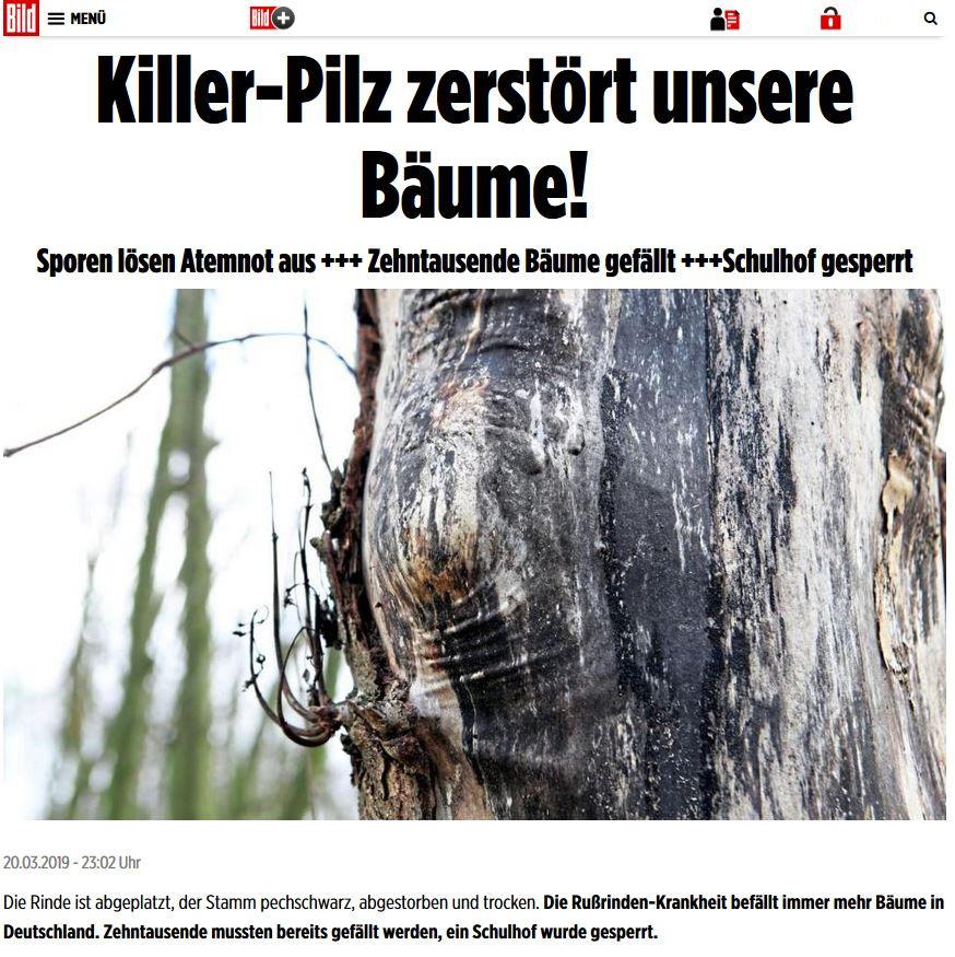 Killerpilz 5G Bäume fällen
