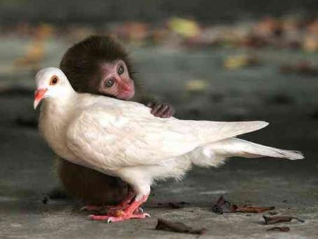 """Ein großartiges Beispiel für die Welt – In Neuseeland gilt – Tiere sind wie Menschen """"fühlende"""" Wese"""