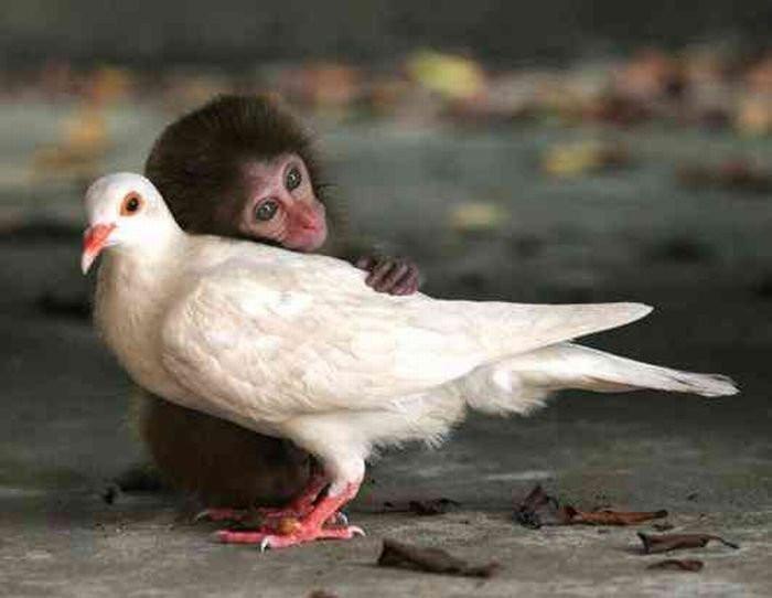 Rechte für Tiere Menschlichkeit
