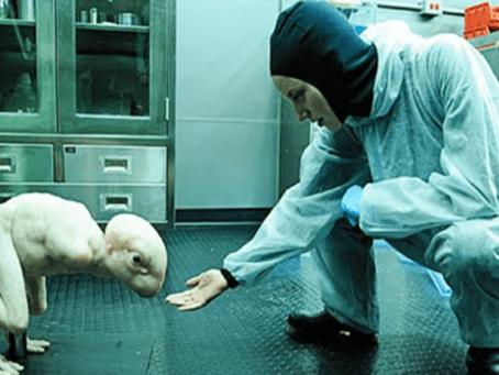 Schreckliches Forschungsprojekt aufgedeckt: Hunderte Mensch-Tier-Hybriden heimlich gezüchtet!