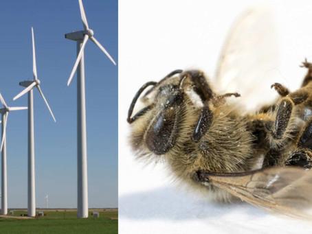 Klimawahn: Windräder töten 5,3 Milliarden Insekten pro Tag, aber Bäume für 5G zu fällen ist ok?!