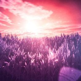 8215845_5e59eb86a3684_filter-infrared-li