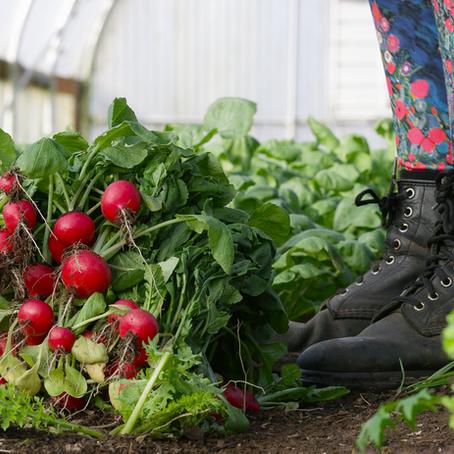 Seasonal Tillamook: A Produce Guide