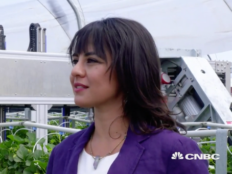 On Camera for CNBC Presenting Strawberry-Picking Robots (IOT - Powering the Digital Economy)