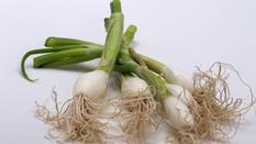 Faire repousser à l'intérieur des herbes et des légumes