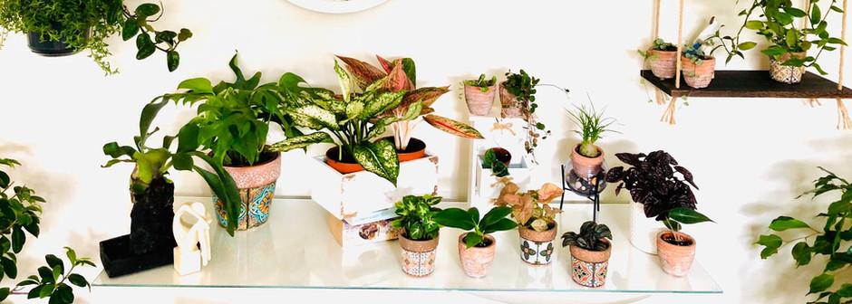 Mia's Rare Plants