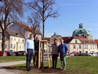 Rund 6.500 Bäume lassen sich in Klosterneuburg feiern – und bekommen Nachwuchs