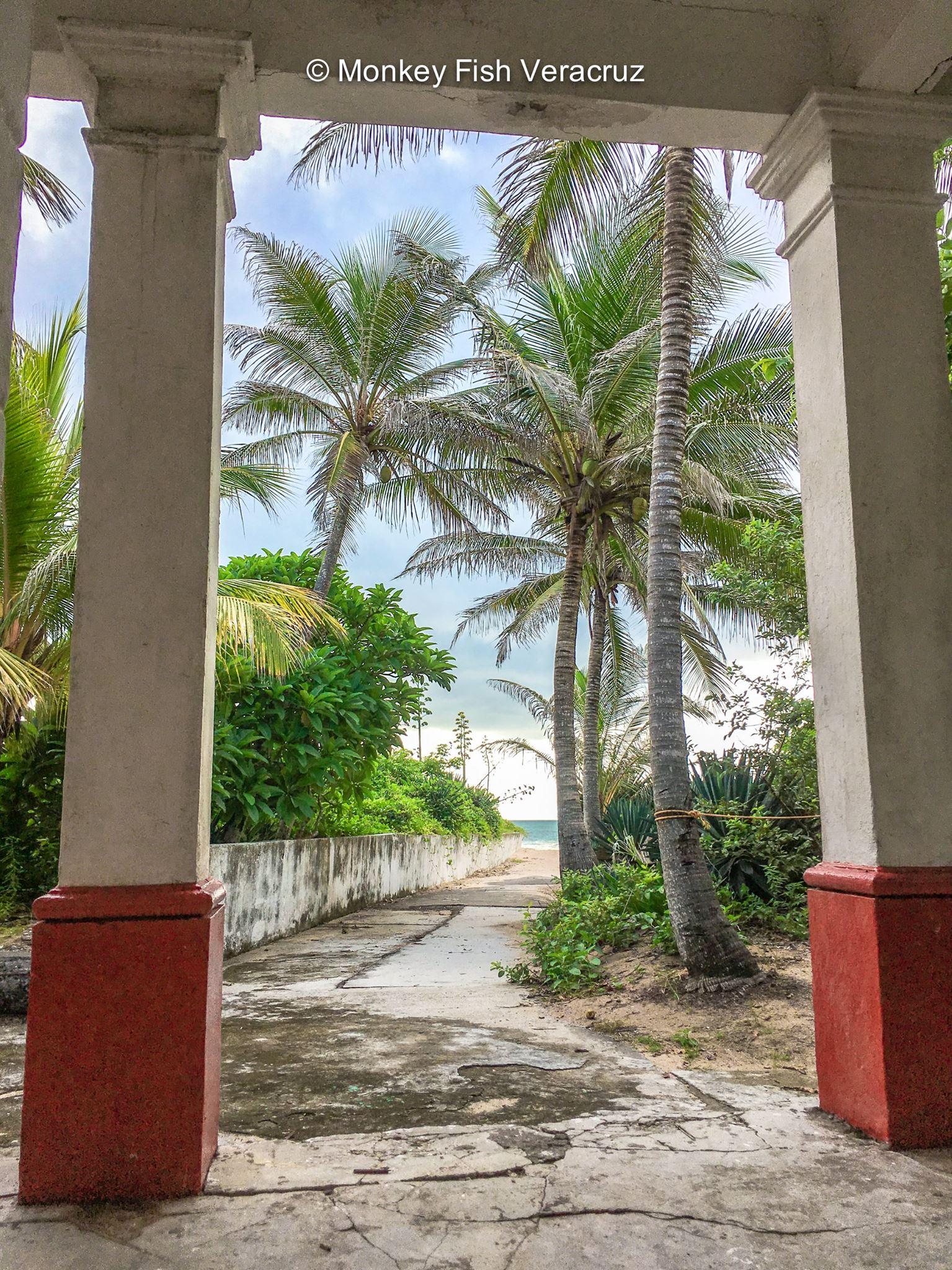 Palmeras Isla de Enmedio