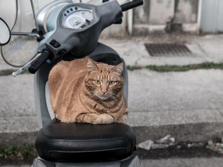 Questo non è un gatto