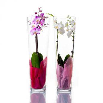 Vase tube cylindrique en verre 70cm