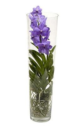 Orchidée dans une vase conique en verre