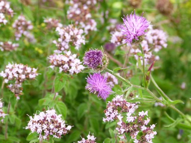 Wonderful Wildflowers 23rd July 2021