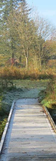 Boadwalk over scrape pond.